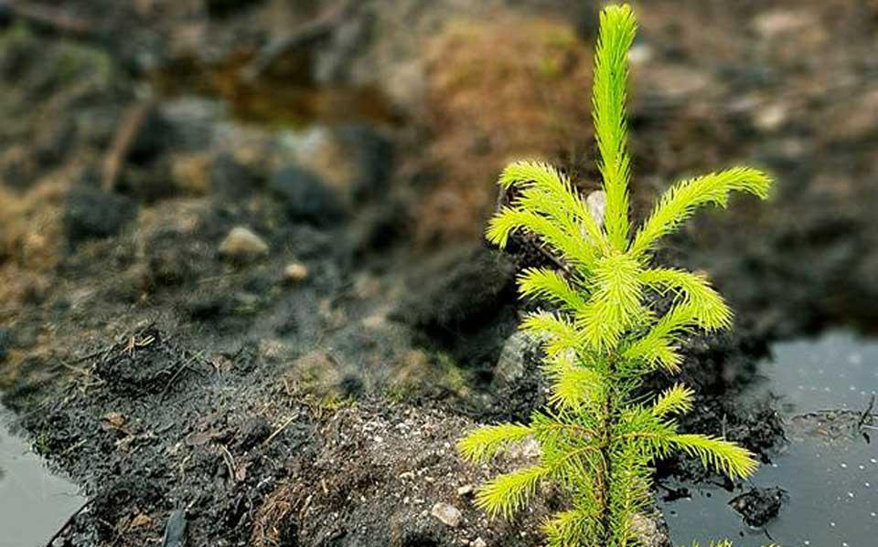 Miljøhensyn ved skogsdrift